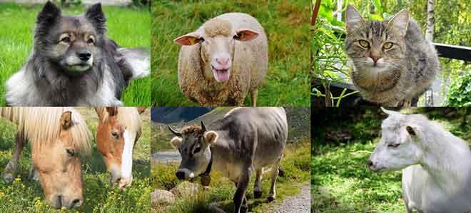 VWG – Vorarlberger Tierkörperverwertung